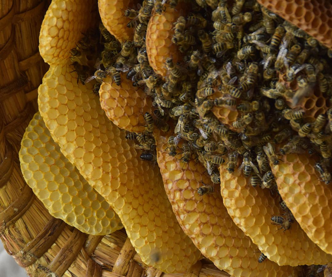 Frühstücks-Honig vom Hofgut-Imker